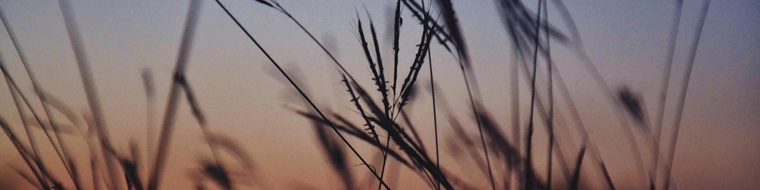 cropped-vegetation-691361_1280.jpg